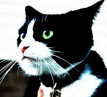 Felix the Cat by michel bazinet