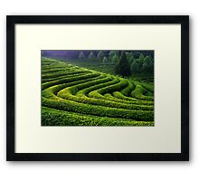 Curves and Light Framed Print
