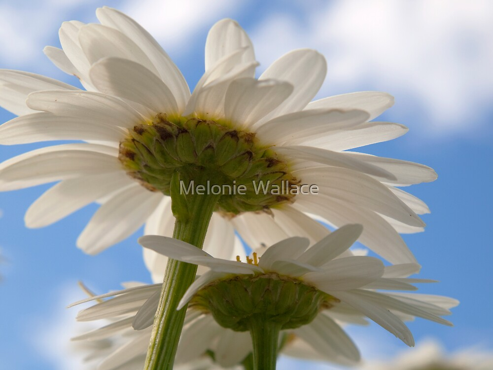 Salute to the Sun by Melonie Wallace