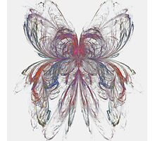 Butterfly Apophysis Photographic Print