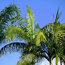 Palm Tree Abstract by Dana Roper