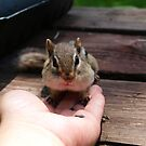eating out of my hand by Cheryl Dunning