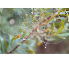 Fancy Web Photographic Print