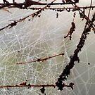 Maze Of Dew Drops by ©Dawne M. Dunton