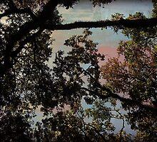 Oak Trees by StudioBlack
