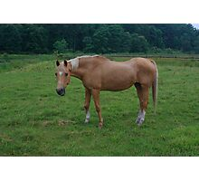 Horse Tan Photographic Print