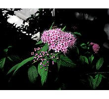 Buds & Blooms Photographic Print