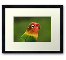 Love Call Framed Print