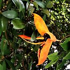 Orange Tree Seed Pod Flower Hong Kong by exaltedshrimp