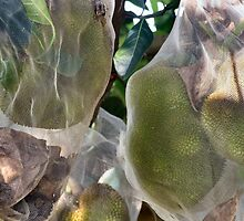A tropical Durian Asian  Fruit Tree by exaltedshrimp
