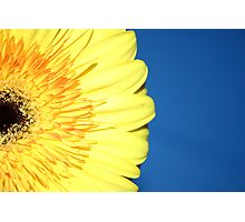 A Splash Of Yellow Photographic Print
