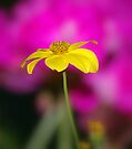 A Lonely Flower.... by Larry Llewellyn