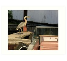 heron in the boathouse Art Print