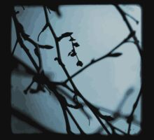 Winter Blues - TTV by Kitsmumma