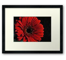 Red Gerbera Daisy on Black Framed Print