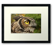 Darwin, A Great Horned Owl Framed Print