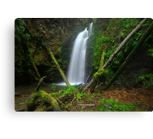 Wild Dog Falls - Great Otway National Park Canvas Print