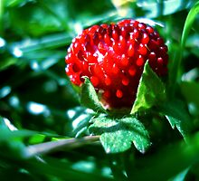 Wild Strawberry by Shannon Barker