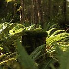 Moss everywhere - Kepler walk, Te Anau, New Zealand by fns720
