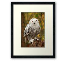 Pepsi, A Snowy Owl Framed Print
