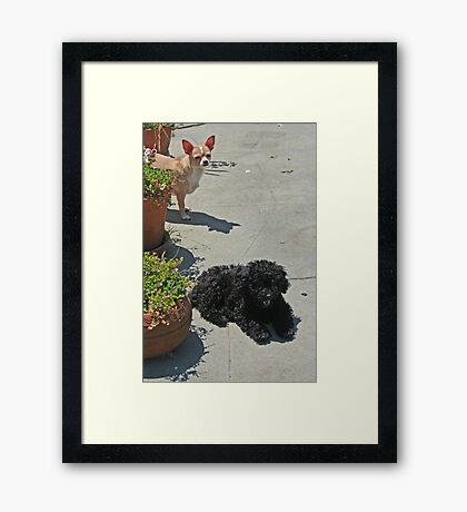 Daisy and Sophie Framed Print