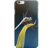 Dashing Blue Dasher Dragonfly iPhone Case/Skin