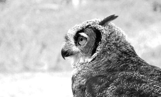 Dexter, A Great Horned Owl by Bryony Griffiths