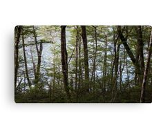 Water through the trees  Canvas Print