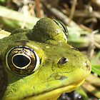 Froggy Fellow by Olivia Burger