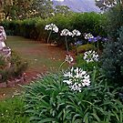 Majorcan garden by hilarydougill