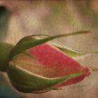 Vintage Rosebud by Catherine Mardix