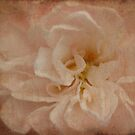 Vintage Rose by Catherine Mardix