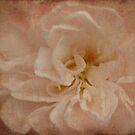 Vintage Rose by Catherine Mardix
