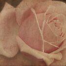 Beauty by Catherine Mardix