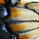 Butterfly wing by elasita