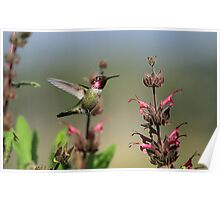 Ruby Throated Hummer Frozen With Style Poster