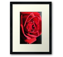 Red Rose Profile Framed Print