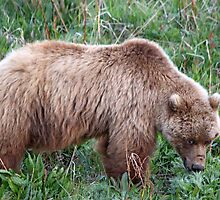 I Am Grizzly by Vickie Emms