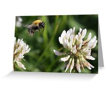 Flight of the bumble bee Greeting Card