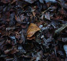Dead Leaves by Philip Bateman