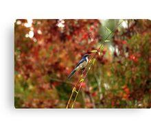 Blue Bird Enjoying Fall Color Canvas Print
