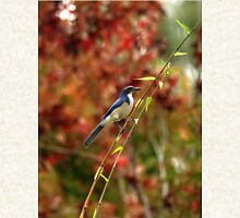 Blue Bird Enjoying Fall Color Zipped Hoodie