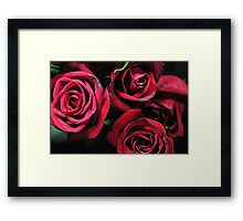 Red Roses 4 Framed Print