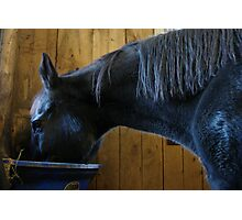 Cozy in the Barn Photographic Print