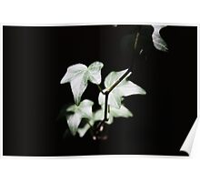 Ivy 1 Poster