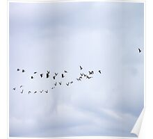 Flock This Way Canadian Geese Poster