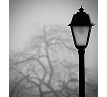 Lamp and Tree. Photographic Print