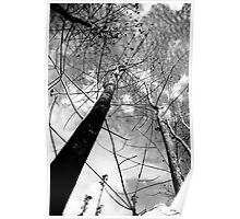 Nature - Tall Trees Poster