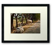 Burmese Cows Framed Print