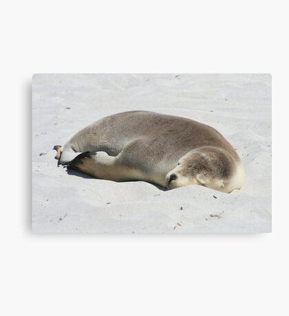 Asleep On The Sand Canvas Print